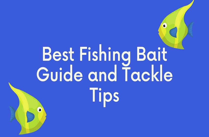 Best Fishing Bait Guide & Tackle Tips