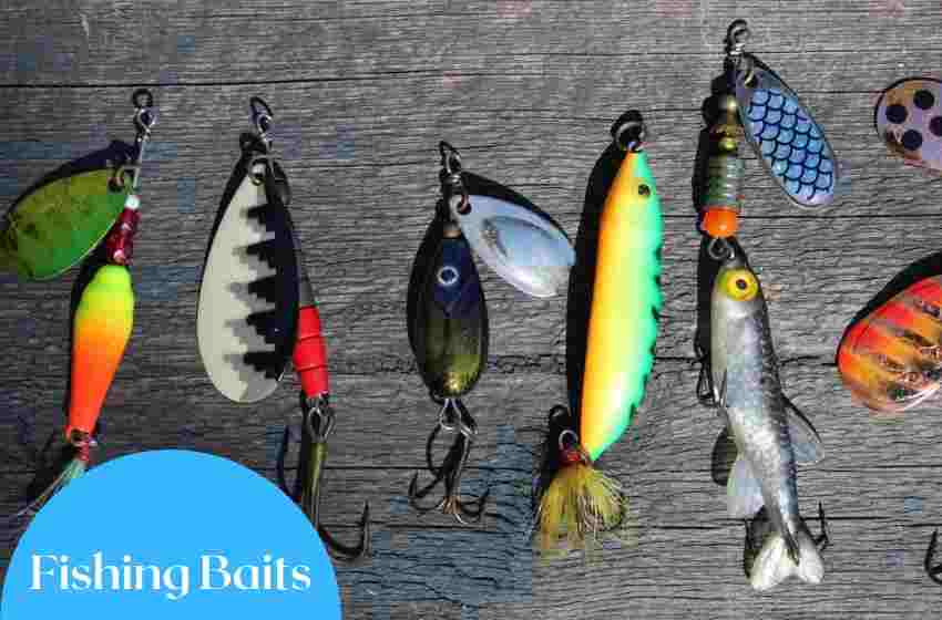 Best Fishing Baits for Lakes AND Saltwater