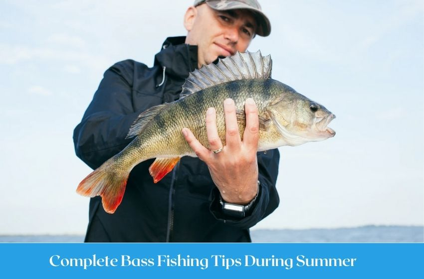 Complete Bass Fishing Tips During Summer